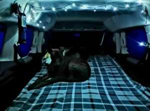 cosy campal with dog